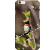 Ruby-throated Hummingbird (Male) iPhone Case/Skin