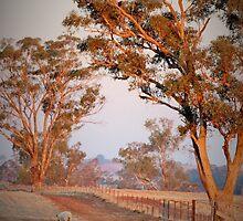 Sun Shining On Gum Trees  by RawDust