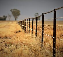 Weeds , Storm and a Fence  by RawDust
