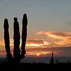 Cactus Sunset by richx99