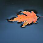 Autumn Arrives by Brian Dodd