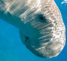 Dugong At The Surface by KenByrne