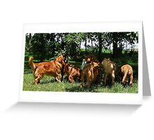 Stealing Apples Greeting Card