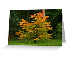 Changing Colours of Autumn Greeting Card