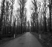 Lonely Road by wolfcat