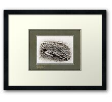 Casualty of War Framed Print