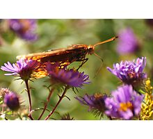 Orange Butterfly-Unique View Photographic Print