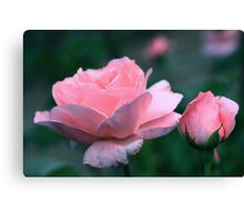 Queen Elizabeth Grandiflora Rose Canvas Print