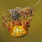 Spider With Prey by Robert Abraham