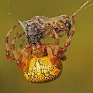 Spider With Prey by Robert Abraham