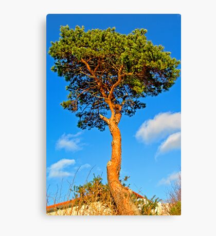 Urban Tree Canvas Print
