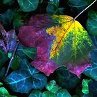 Signs of Autumn by Jessica Jenney