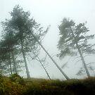 Misty Day by Milos Markovic