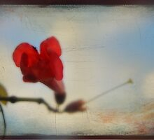 Summer Bloom by Laurie Search