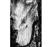 Scar Tissue Photographic Print