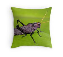 Colorful Cricket Throw Pillow