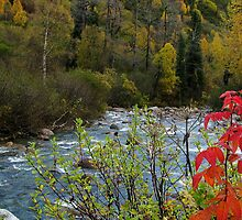 LITTLE SUSITNA RIVER - ALASKA by 1arcticfox