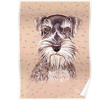 Miniature German Schnauzer dog Poster