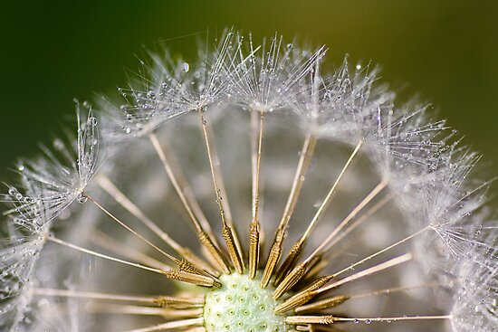 Dandy Dande by Mandy Disher