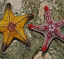 Stars From Bazaruto         Mozambique by BaZZuKa