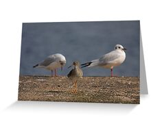 Redshank - a rose between two thorns Greeting Card