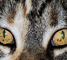 Moxies Eyes by trueblvr