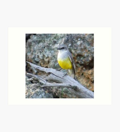 yellow robin 2 Art Print