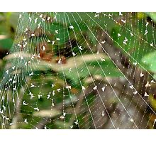 Spiders Buffet Photographic Print