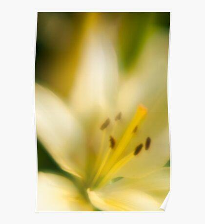 White/Yellow Poster