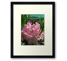 Pink Rhododendrum Framed Print