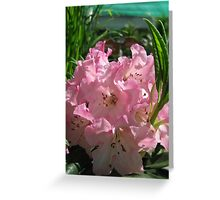 Pink Rhododendrum Greeting Card