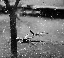 Metal Dragonflies by Edwin Firminger