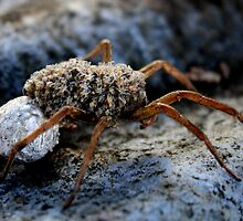 Wolf Spider Birth by Charles Buchanan