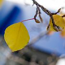 Yellow leafs, autumn by Kornrawiee