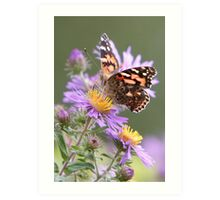 An American Painted Lady Butterfly 1 Art Print