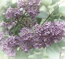 Lilac Fading Away......... by lynn carter