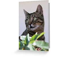 Tabby Cat Sitting In The Shade Behind Passiflora Vine Greeting Card