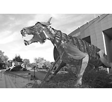 Princeton University Stadium Tigers Photographic Print