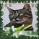 Tabby Cat Sitting In The Shade Behind Passiflora Vine by taiche