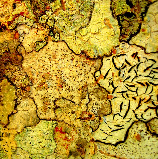 Macro Bark by Vanessa Barklay
