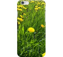 Dandelions in the Field iPhone Case/Skin