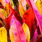 colored leaves by ANNABEL   S. ALENTON
