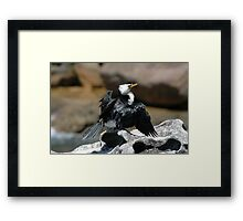 Cormorant @ Sculptures By The Sea 2011 Framed Print