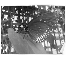 Butterfly 8 Poster