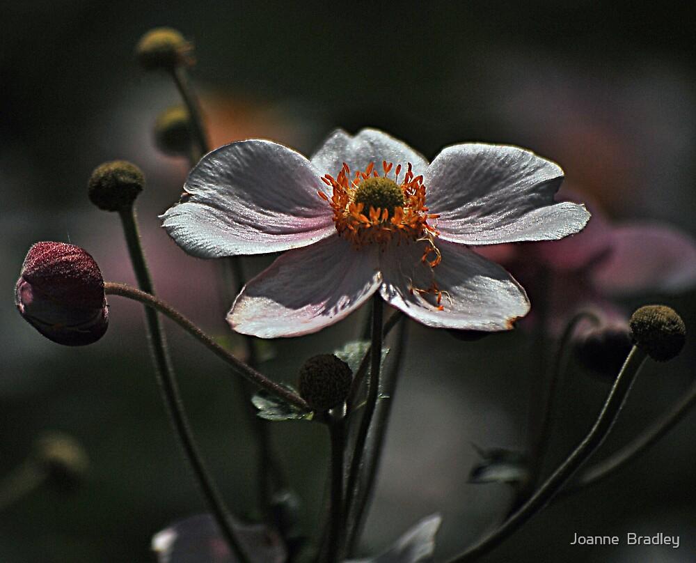 August Flowers ~ Anemones by Joanne  Bradley