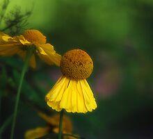 Flower Ballet by Joanne  Bradley