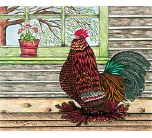 """""""April's Rooster"""" Photographic Print"""