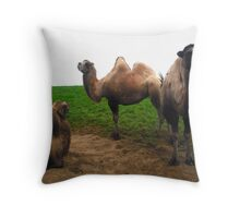 camels  - Noah's Ark Zoo Farm Throw Pillow