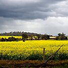Fields of Gold by Jazzyjane