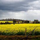 Fields of Gold by Jazzyjane